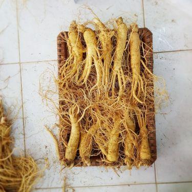 Sâm tươi Hàn Quốc loại 10 củ 1 kg