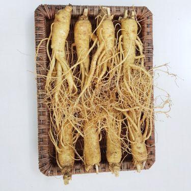 Sâm tươi Hàn Quốc loại 8 củ 1 kg